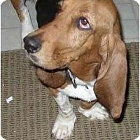 Adopt A Pet :: Blossom Dearie - Phoenix, AZ