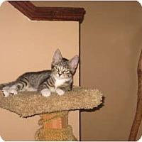 Adopt A Pet :: Eli - Portland, ME