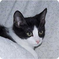 Adopt A Pet :: Diamond - New Egypt, NJ