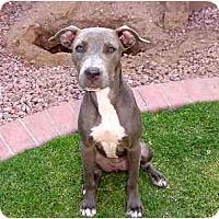 Adopt A Pet :: Daisy Blue - Scottsdale, AZ