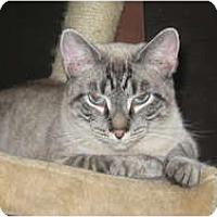 Adopt A Pet :: Romeo&Marie - Clay, NY