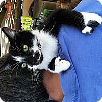 Adopt A Pet :: Alice - Santa Monica, CA