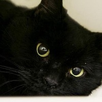 Adopt A Pet :: Dena - Herndon, VA