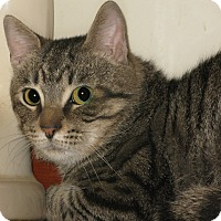 Adopt A Pet :: Biff - Bedford, VA