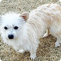 Adopt A Pet :: Mittens - Mesquite, TX