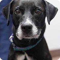 Adopt A Pet :: Baby - Laplace, LA