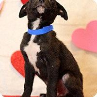 Adopt A Pet :: Henry - Waldorf, MD