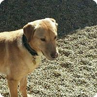 Adopt A Pet :: Skeeter - Island Lake, IL
