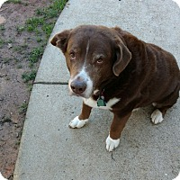 Adopt A Pet :: Jake (COURTESY POST) - Alpharetta, GA