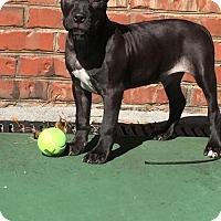 Adopt A Pet :: Snickers - Dallas, GA