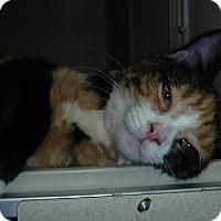 Adopt A Pet :: Carmen - Hamburg, NY