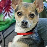 Adopt A Pet :: Jack Jack - Staunton, VA