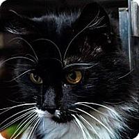 Adopt A Pet :: Baby - Plattekill, NY