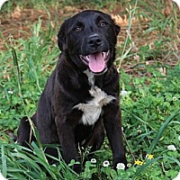 Adopt A Pet :: Dexter-Reduced fee to $250 - Foster, RI