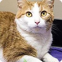 Adopt A Pet :: Daffodil - Chicago, IL