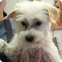 Adopt A Pet :: Bloom - Phoenix, AZ