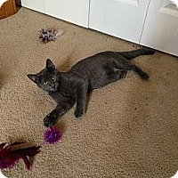 Adopt A Pet :: Eddie - Fort Collins, CO