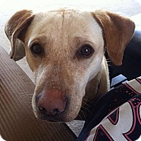 Adopt A Pet :: Johnny - Plainfield, CT