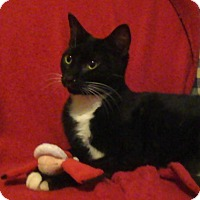 Adopt A Pet :: Colin - St. Louis, MO
