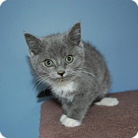 Adopt A Pet :: Fiona - McDonough, GA