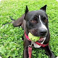 Adopt A Pet :: Wrigley - Yorba Linda, CA
