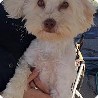Adopt A Pet :: Morrison - Rancho Cucamonga, CA