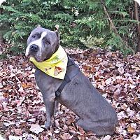 Adopt A Pet :: Blue - Gainesboro, TN
