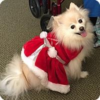Adopt A Pet :: Izzie - conroe, TX