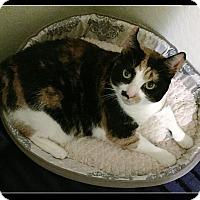 Adopt A Pet :: Curly-Q - Gilbert, AZ