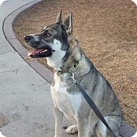 Adopt A Pet :: Kohad - Dana Point, CA
