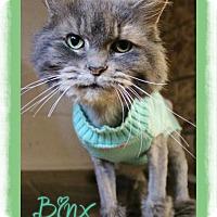Adopt A Pet :: Binx - Shippenville, PA