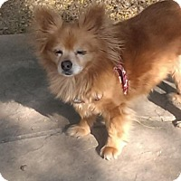 Adopt A Pet :: Fancy - Tucson, AZ