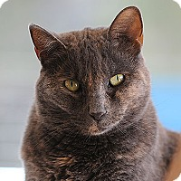 Adopt A Pet :: Kisses - Kanab, UT