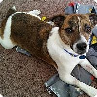 Adopt A Pet :: ROCKY - Elyria, OH