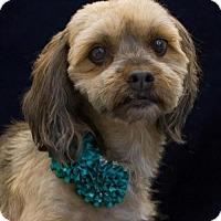 Adopt A Pet :: Addie - Phelan, CA