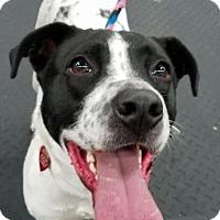 Adopt A Pet :: Adeline - Plainfield, IL