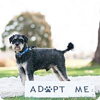 Adopt A Pet :: Franklin Fluffertail - Boise, ID