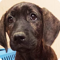Adopt A Pet :: Sazzy - Preston, CT