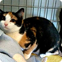 Adopt A Pet :: Atina - Jefferson, NC