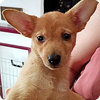 Adopt A Pet :: Coral - Oakland, CA