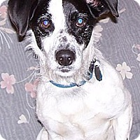 Adopt A Pet :: Lucas - Conway, AR