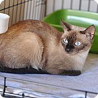 Adopt A Pet :: Jezabelle - Shreveport, LA