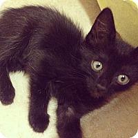 Adopt A Pet :: Blackie - Houston, TX
