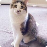 Adopt A Pet :: Dash - Plantsville, CT