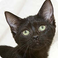 Adopt A Pet :: Katarina V - Sacramento, CA