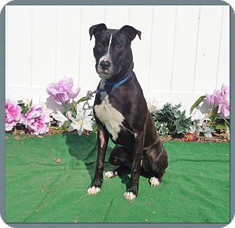 Labrador Retriever Mix Dog for adoption in Marietta, Georgia - DANE (R)