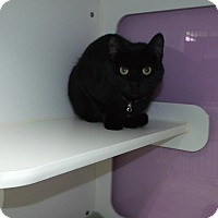 Adopt A Pet :: midnight - Muskegon, MI