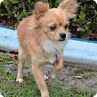 Adopt A Pet :: Ted - thibodaux, LA