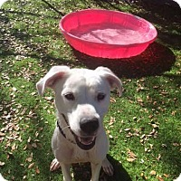 Adopt A Pet :: Rhyme - Fort Myers, FL