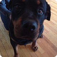 Adopt A Pet :: Rose - Rexford, NY